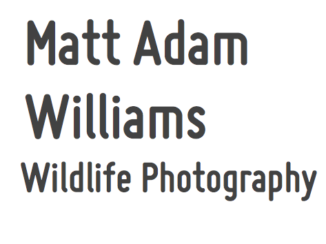 Matt Adam Williams logo